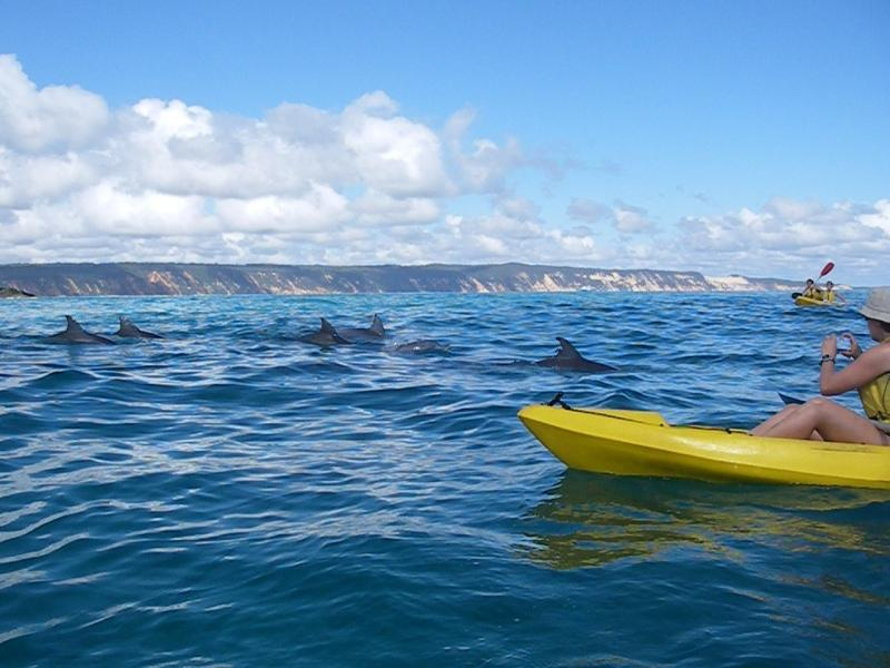 kayak and dolphins