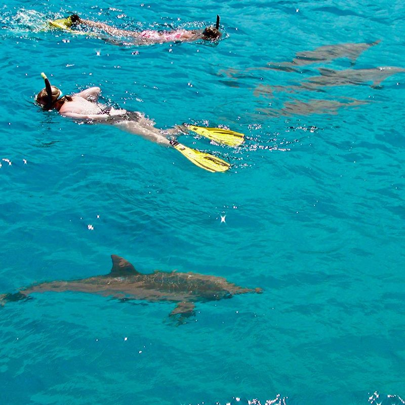 snorkel with dolphins