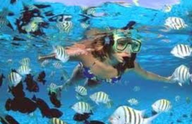 moreton island tangalooma snorkeling wrecks fish snorkel adventure sunset